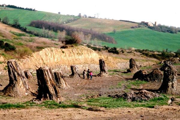foresta-fossile-conifere-dunarobba